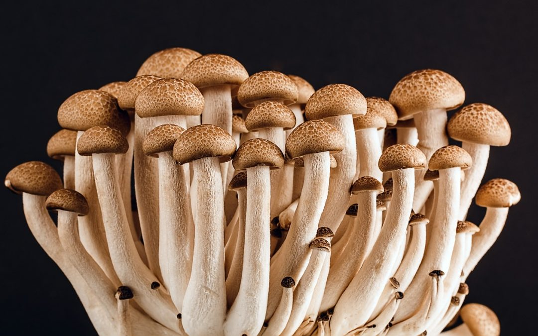 Food Trends 2019: There is a fungus among us